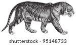 Tiger  Panthera Tigris   ...