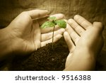 female hands protecting a new... | Shutterstock . vector #9516388