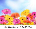 Beautiful Gerber Flowers With...