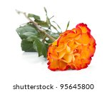 Orange rose flower. Isolated on white background - stock photo