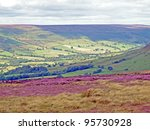 Heather In Bloom On The Moor...