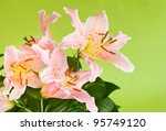 beautiful pink lily flowers on green background - stock photo