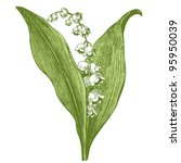 Lily Of The Valley   Vintage...