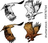 an eagle flying  lineart and...   Shutterstock .eps vector #95978764