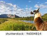 Llama Sitting At An Idyllic...
