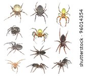 European spiders, collection isolated on white background - stock photo