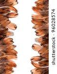 photo shot of feather background - stock photo
