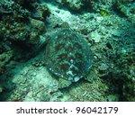turtle underwater | Shutterstock . vector #96042179
