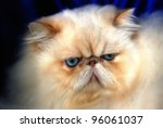 Close-up portrait of a cat - stock photo