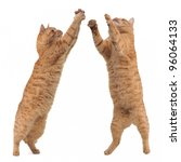 Stock photo two cats competitng for a toy cut out 96064133