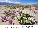 Wildflowers In Anza Borrego...