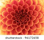 Stock photo flower and beautiful petals 96172658