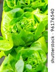 Hydroponics vegetable , nutrition of food in the future - stock photo