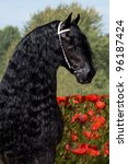 Portrait of a nice Friesian horse - stock photo
