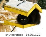 Black cat on a yellow bird's feeder - stock photo