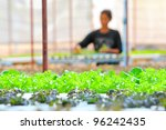 Hydroponics Vegetable ,the nutrition in the future. - stock photo