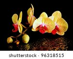 Yellow fresh orchid  with drop of dew  on a black - stock photo