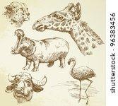 wild african animals   hand...   Shutterstock .eps vector #96383456