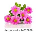 Stock photo pink chrysanthemum flowers isolated on white 96398828