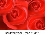 very nice fresch red rose natural background - stock photo