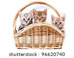 Kittens In Basket On White