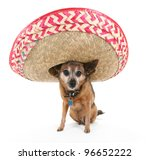a chihuahua wearing a spanish sombrero - stock photo