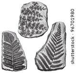 Fern Fossils   Vintage...