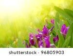 spring purple flowers in the... | Shutterstock . vector #96805903