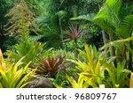 Tropical Garden In Cairns ...