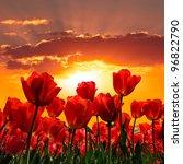 Floral Background. Sunset....