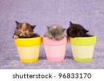 Sleeping Kittens In Colorful...