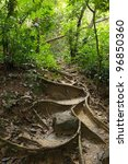 Jungle Trail With Tree Roots I...