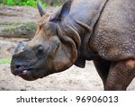 Постер, плакат: The Indian rhinoceros Rhinoceros
