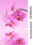 beautiful orchid  phalaenopsis  ... | Shutterstock . vector #9698650