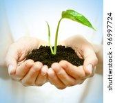 human hands holding green small ... | Shutterstock . vector #96997724
