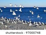 A Swarm Of Seagulls Sitting An...