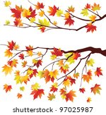 Autumn Maple Tree Branches On...
