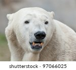Polar bear (Ursus maritimus) - stock photo