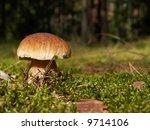 boletus | Shutterstock . vector #9714106