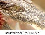 close up of crocodile - stock photo