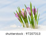 spring flowers  snowdrops ... | Shutterstock . vector #97207313