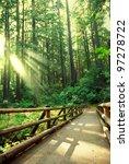 Boardwalk In Forest