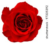 Stock photo red rose isolated on white background 97335392