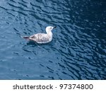 An Image Of Seagull On The Sea