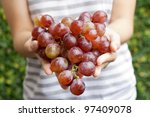 red grapes hold by two hands.. | Shutterstock . vector #97409078