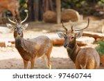 siamese eld's deers | Shutterstock . vector #97460744