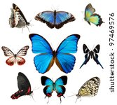 Stock photo exotic butterflies collection isolated on white 97469576