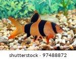 Aquarian Fish Floats In An...