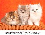 Stock photo chinchilla persian kittens on orange cushion on orange background 97504589
