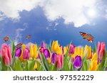 Spring Tulips   Field Of Sprin...